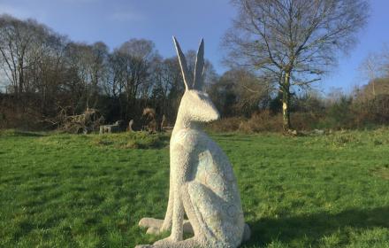 Hare Medicine 3